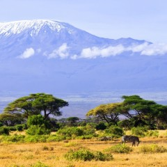 Once Upon a Time My Mom Climbed Mount Kilimanjaro